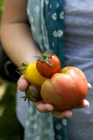 Tomates_A_Bibaut