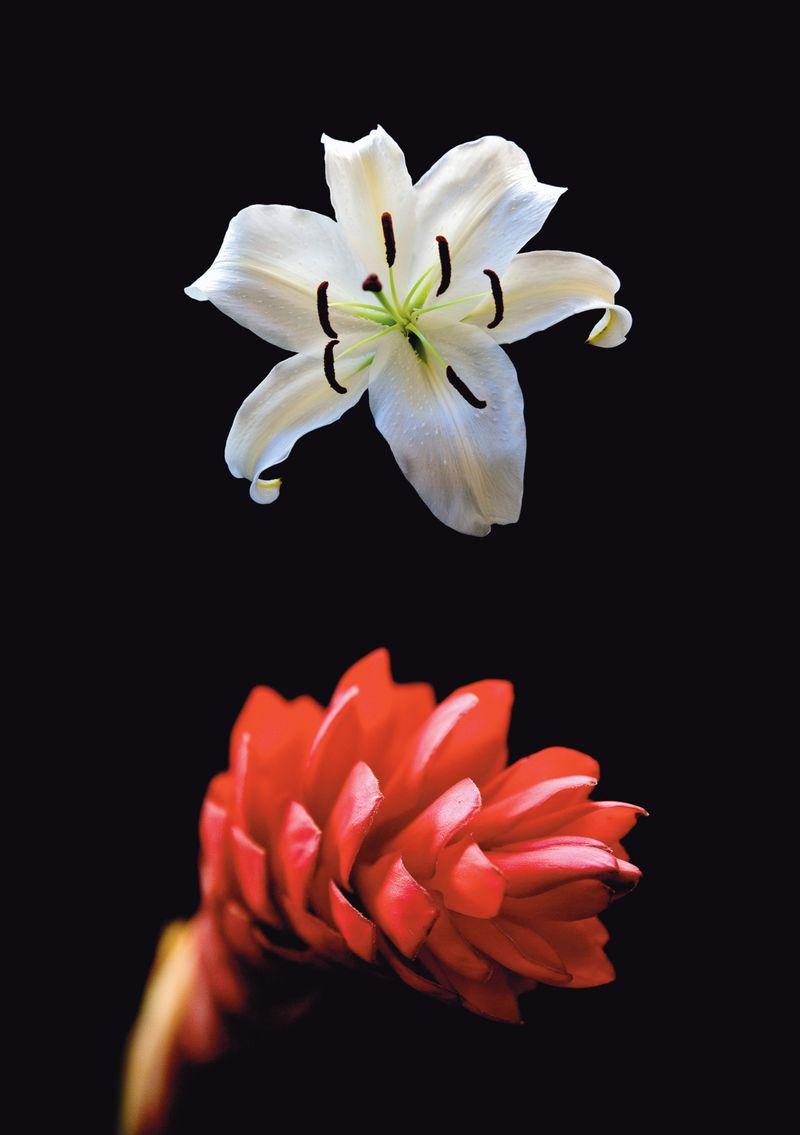 Flowerduet