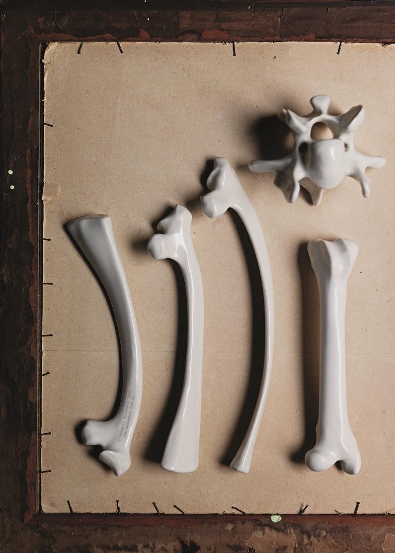 Bonesbowerbirdp80