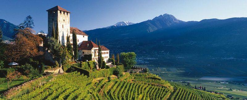 Mountain-vineyard