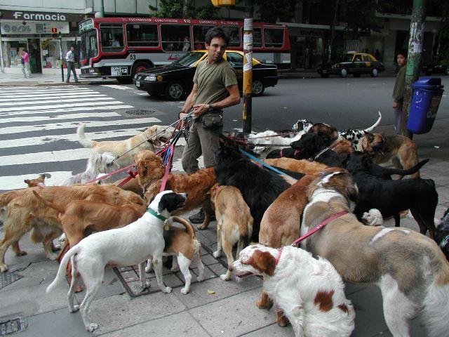 Donts_dogwalker_7