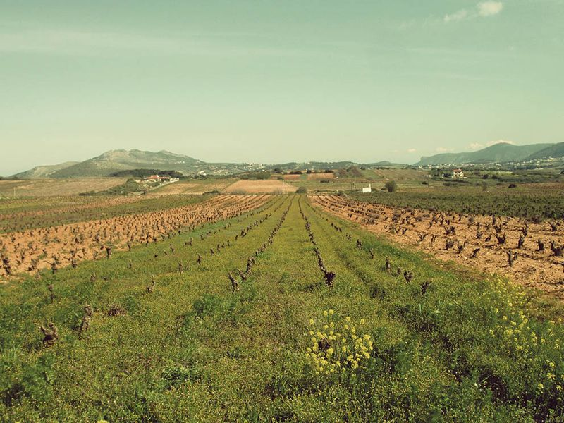Papagiannakos vineyard